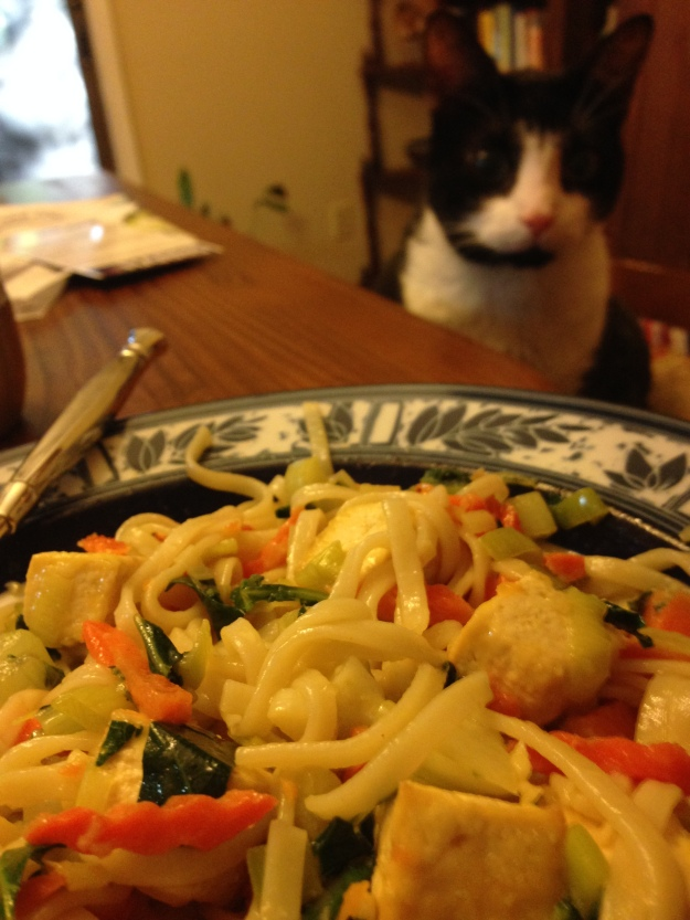 Cat and noodles